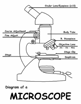 Microscope Drawing Worksheet Microscopes and...