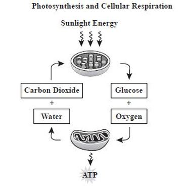 what is the relationship between chemical equations for photosynthesis and aerobic respiration