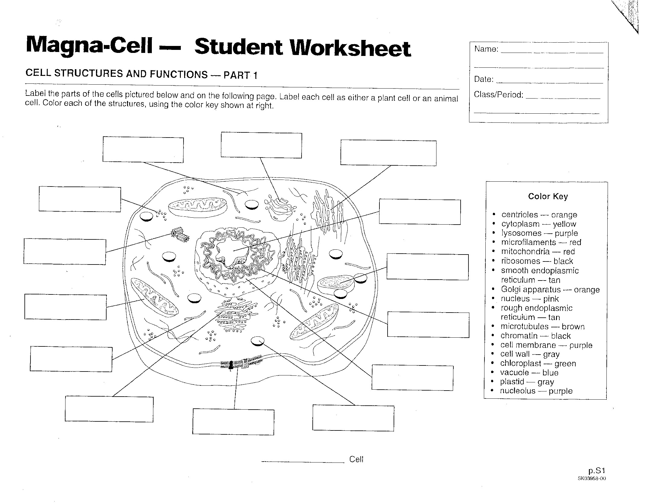 Cells Mrs Musto 7th Grade Life Science – Plant and Animal Cell Diagram Worksheet